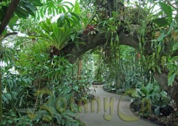 Lowland Tropical Rain Forest