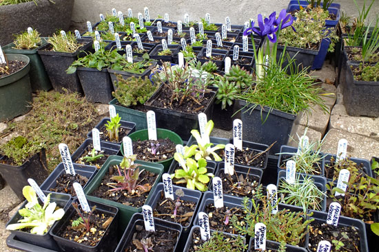 Plant donation for spring sale