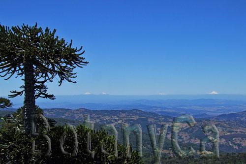 Plants And Landscapes From Nahuelbuta National Park Botanically
